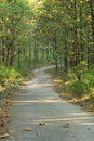 Forest walking path in the summer Stock Photos