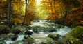 Forest waterfall autumn creek woods with yellow trees foliage and rocks in mountain Royalty Free Stock Image