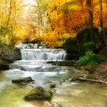 Forest waterfall autumn creek woods with yellow trees foliage and rocks in mountain Royalty Free Stock Photos