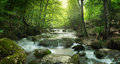 Forest waterfall and rocks covered with moss Royalty Free Stock Photo