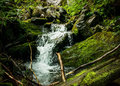 Forest waterfall and rocks covered with moss Stock Photography