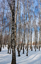 Forest in winter Royalty Free Stock Image