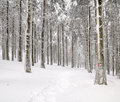 Forest in winter covered with snow Stock Image