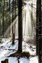 Forest in winter season or autumn fall sunrise sunlight rays on woods fog and mist park Royalty Free Stock Images
