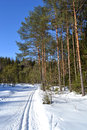 Forest in winter sunny day and ski run leningrad region russia Stock Photo