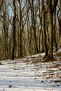 Forest in winter time Stock Photo