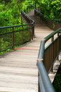 Forest wooden walkway Royalty Free Stock Images