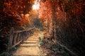 Foresta di autunno di fantasia con il modo del percorso attraverso gli alberi densi Fotografie Stock