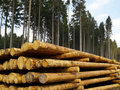 Forestry Royalty Free Stock Image
