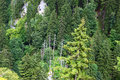Forests in alps Royalty Free Stock Photo