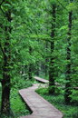 Forests the with a road in spring Stock Image