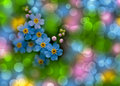 Forget-me-not with bokeh Royalty Free Stock Photography