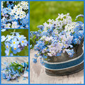 Forget me not collage of and cuckoo flowers Stock Photo