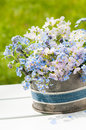 Forget me not and cuckoo flowers in a flower pot Stock Images