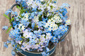 Forget me not and cuckoo flowers in a flower pot Stock Image
