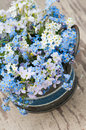 Forget me not and cuckoo flowers in a flower pot Royalty Free Stock Photo