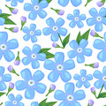 Forget-me-not flower seamless pattern Royalty Free Stock Image
