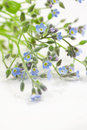 Forget me not flowers a bouquet of tiny the background is a white table Royalty Free Stock Image