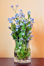 Forget me not flowers bouquet in a vase Royalty Free Stock Photo