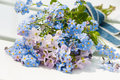 Forget me not flowers on white background Stock Photo