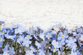 Forget-me-not flowers on wooden background Royalty Free Stock Photo