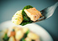 Forkful of salmon gnocchi and basil grilled italian seasoned with herbs spices suspended above the plate with selective focus Royalty Free Stock Images