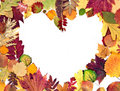 Form the heart of autumn leaves Stock Photography