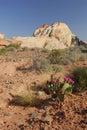 Formações do Sandstone no vale do incêndio, Nevada Foto de Stock