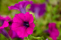 Formal garden flower Royalty Free Stock Photo
