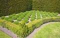 Formal lavender herb garden Royalty Free Stock Image