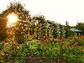 Formal rose garden with arching trellises at sunrise Stock Photo