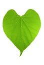 Forme de lame verte de coeur Image libre de droits