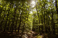 Forrest dark path with sun over trees Royalty Free Stock Images