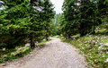 Forrest path or mountain road trail leading to infinity.