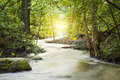 Forrest stream landscape with and sunlight Royalty Free Stock Photography