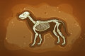 Fosil of extincted animal under the ground Stock Photo