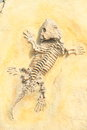 Fossil of an animal in a stone Royalty Free Stock Photo