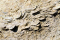 Fossil Oysters in Patagonia Royalty Free Stock Photography