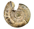 Fossil sea shell Royalty Free Stock Images