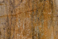 Fossil of wood texture background Stock Images