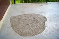 Fossilized imprint of the giant heart shaped plant leaf in the concrete floor in the hotel balcony, Phi phi island, Thailand. Royalty Free Stock Photo