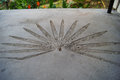 Fossilized imprint of the giant plant leaf in the concrete. Phi phi Thailand. Royalty Free Stock Photo