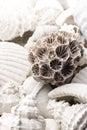 Fossilized seashell background Stock Photo
