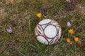 Fotball in the grass surrounded by flowers Stock Images