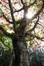 Foto de natureza arvore contra luz do sol Royalty Free Stock Photo