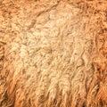 Foto do teste padrão background stock da textura da tela de lãs do camelo Fotografia de Stock Royalty Free