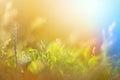 Foto do vintage do campo de grama no por do sol Foto de Stock Royalty Free