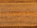 Fotografia colorida do campo de grão Fotografia de Stock Royalty Free