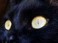 Fotografia do detalhe dos olhos de gato Fotos de Stock