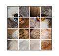 Fotografia skład kota głowa robić z różnorodnymi kotami Fotografia Royalty Free